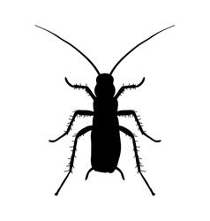 silhouette of cockroach Blattella germanica vector image