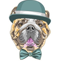 hipster dog English Bulldog breed vector image vector image