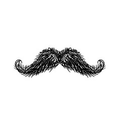 mustache isolated facial hair on white background vector image