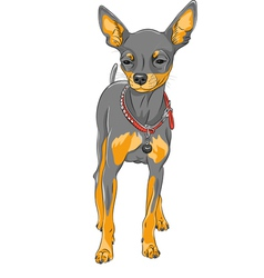 Cute serious dog Chihuahua vector