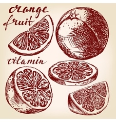 fruit orange set hand drawn llustration vector image