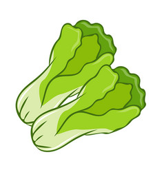 Green lettuce cartoon isolated vector