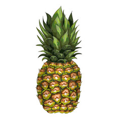 hand-drawn pineapple vector image