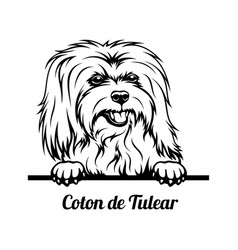 Peeking dog - coton de tulear breed - head vector