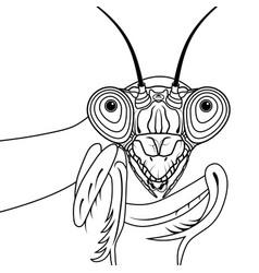 Portrait of green praying mantis vector