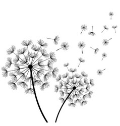 white background with two stylized black dandelion vector image