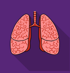 human lungs icon in flat style isolated on white vector image vector image