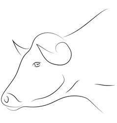 Black line bull head on white background hand vector