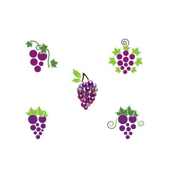 Grape with leaf icon vector