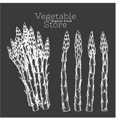 hand drawn asparagus on chalk board vector image