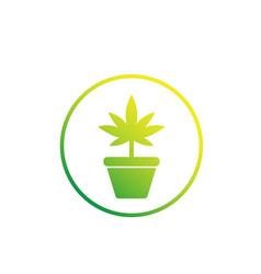 Marijuana plant in pot icon on white vector
