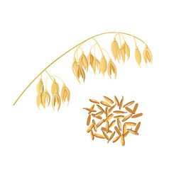 Oat ears of grain and bran golden spike and corn vector