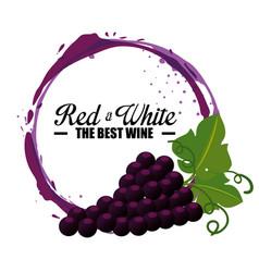 best wine grapes label vector image