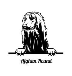 Peeking dog - afghan hound breed - head isolated vector