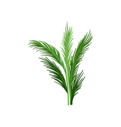 young palm tree with green pinnate leaves vector image