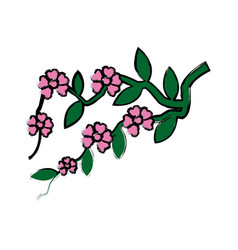 Branch sakura with flowers cherry blossom vector