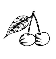 cherry with leaf black and white hand drawn vector image