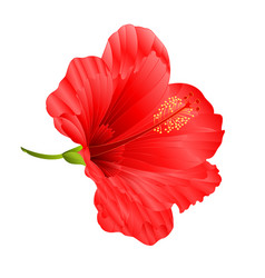 Flower tropical plant hibiscus red vector