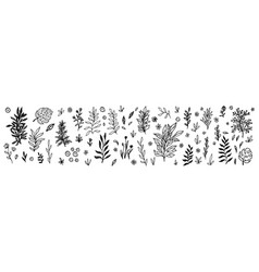 set flowers berries and leaves collection vector image