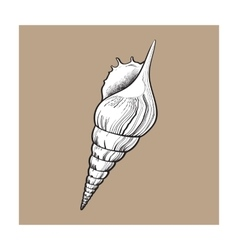 white spiral conch sea shell isolated sketch vector image