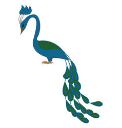 blue and green peacock on white background vector image
