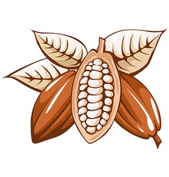 Cocoa bean vector