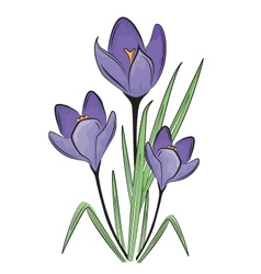 First spring flower vector image vector image