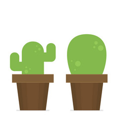 flat cactus in pot set vector image