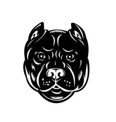Head pit bull or pitbull front view retro vector