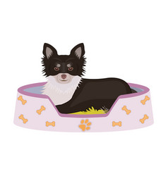 Lounger for a pet a sleeping place dogcare of a vector