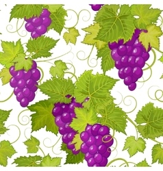 seamless pattern with violet grapes vector image