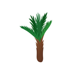 small palm tree with bright green pinnate leaves vector image