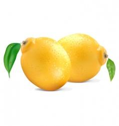 fresh lemons vector image vector image