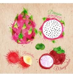 Exotic fruit watercolor dragon fruit rambutan vector