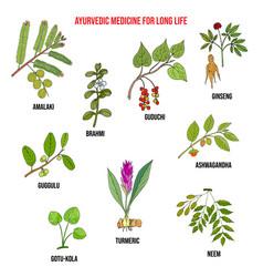 Ayurvedic herbs natural botanical set hand drawn vector