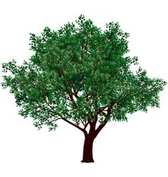 Foliage tree vector