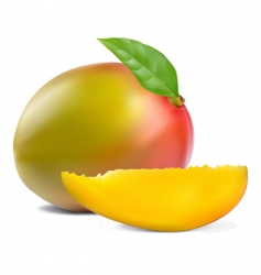 fresh mango vector image