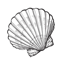 saltwater scallop sea shell isolated sketch style vector image