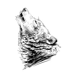 wolf howlssketchy graphical portrait vector image