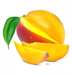 mango with section vector image