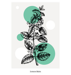hand-sketched lemon balm with flowers and leaves vector image