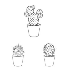 Isolated object of cactus and pot logo set of vector
