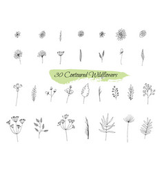 a collection of handmade sketches with plants vector image