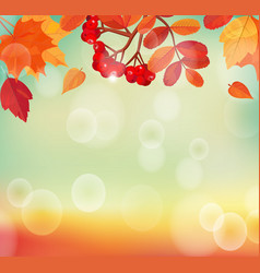 Autumn background with colorful leaves and rowan vector image vector image