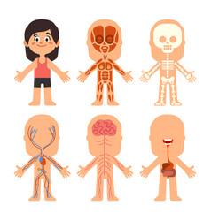 Cartoon girl body anatomy woman veins organs vector