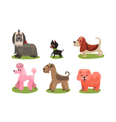 Concept with dogs breed vector