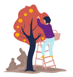 harvesting season woman gathering apples from vector image