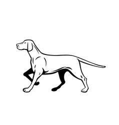 Hungarian or magyar vizsla pointer dog walking vector