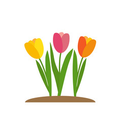 spring tulip flowers background vector image