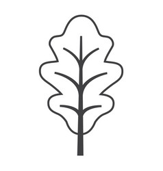 Thin line oak leaf icon vector